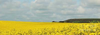 Photograph - Rapeseed Field by Katy Mei