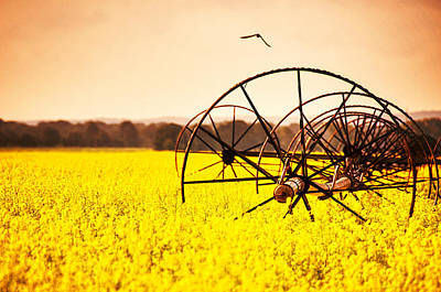 Rapeseed In Bloom Art Print