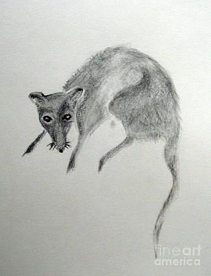 Drawing - Rat by Patricia Januszkiewicz