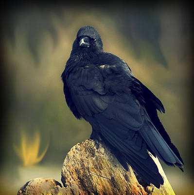 Print featuring the photograph Raven by Yulia Kazansky