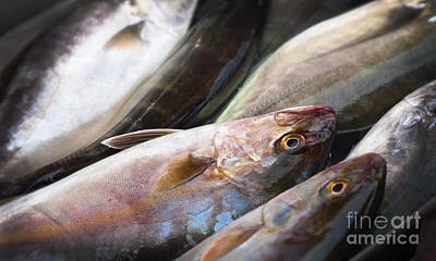 Marsaxlokk Photograph - Raw Fish by Frank Bach