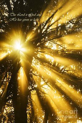 Rays Of Light Art Print by Thomas R Fletcher