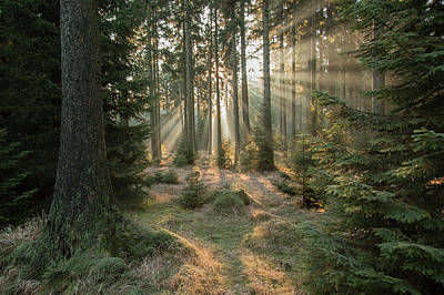 Woodland Wall Art - Photograph - Rays, Part 2 by Vincent Croce