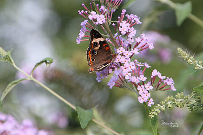 Manipulation Photograph - Red Admiral Butterfly by EricaMaxine  Price
