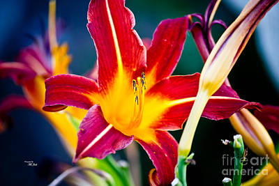 Photograph - Red And Yellow Lily by Ms Judi