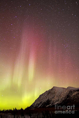 Red Aurora Borealis Over Carcross Art Print by Joseph Bradley