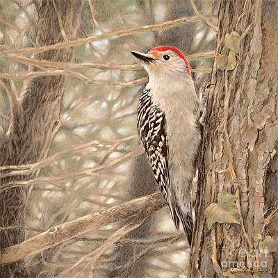 Wall Art - Drawing - Red-bellied Woodpecker by Laurie Musser