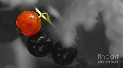 Red Currant Fruit Splash Color Art Print
