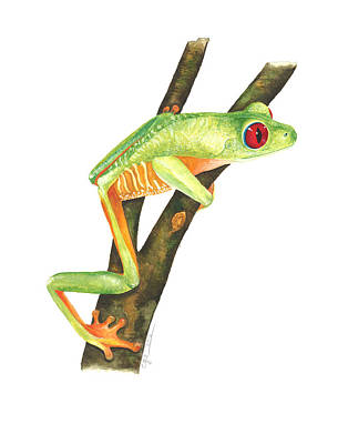 Painting - Red-eyed Treefrog by Cindy Hitchcock