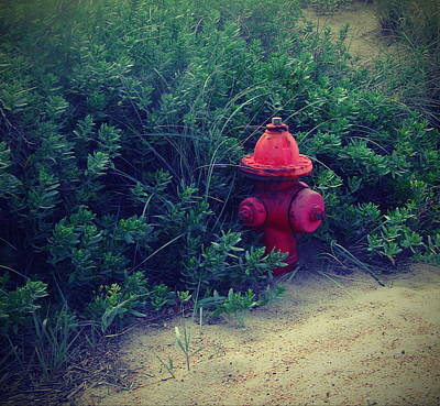 Red Fire Hydrant Art Print by Cathy Lindsey