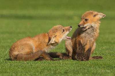 Red Fox Kits Art Print by Everet Regal