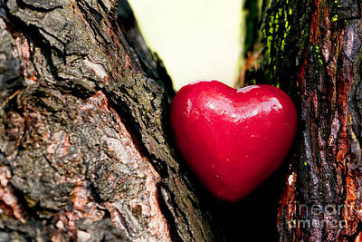 Bark Photograph - Red Heart In A Tree Trunk by Michal Bednarek