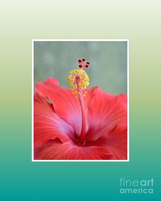 Photograph - Red Hibiscus-v1 by Darla Wood