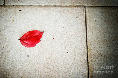 Photograph - Red Leaf by Silvia Ganora