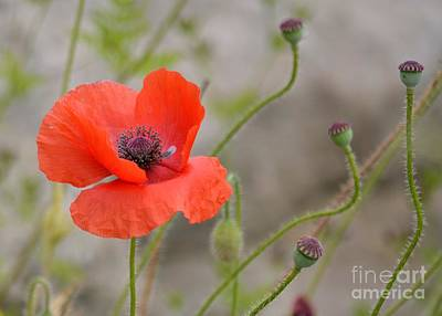 Art Print featuring the photograph Red by Lisa L Silva