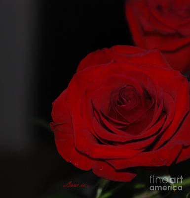 Photograph - Red Rose. Love Is... by Oksana Semenchenko