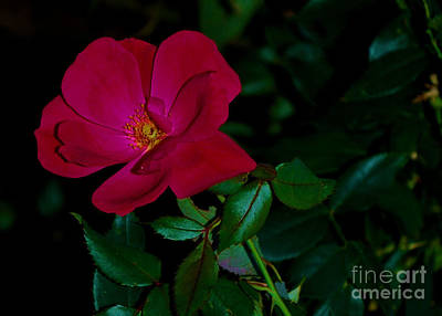 Photograph - Red Rose On Green by Bob Sample