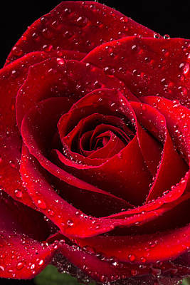 Delicate Photograph - Red Rose With Dew by Garry Gay