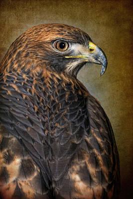 Robert Jensen Photograph - Red-tailed Hawk Buteo Jamaicensis by Robert Jensen