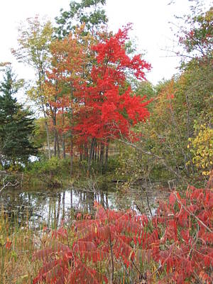 Photograph - Red Tree by Margaret McDermott