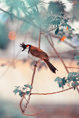 Photograph - Red-whiskered Bulbul. Nature In Alien Skin by Jenny Rainbow