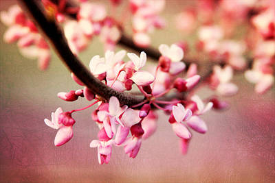 Photograph - Redbud Blossoms by Trina  Ansel