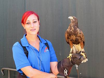 Photograph - Redhead With Falcon by Nina Donner