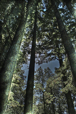 Photograph - Redwoods 4 Big Basin by SC Heffner