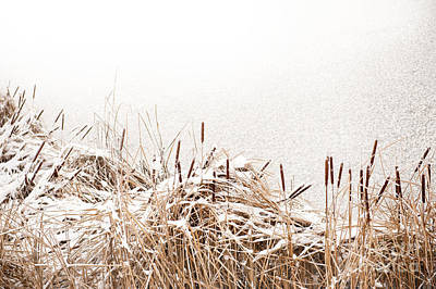Snow On Coastal Typha Reeds In Park  Art Print by Arletta Cwalina