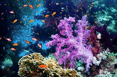 Goldie Photograph - Reef Coral And Fish by Georgette Douwma