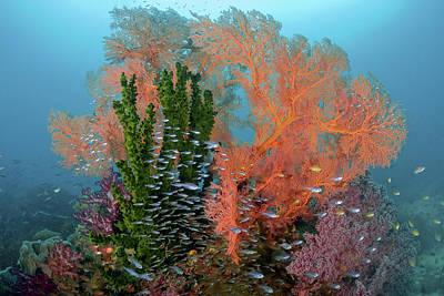 Raja Ampat Photograph - Reef Scenics, Raja Ampat Islands, Irian by Jaynes Gallery