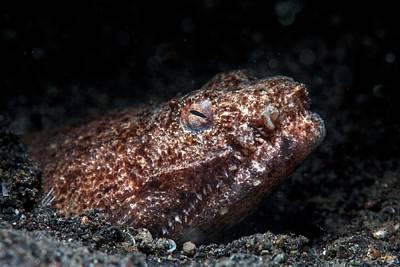 Reptilian Snake Eel Art Print by Ethan Daniels