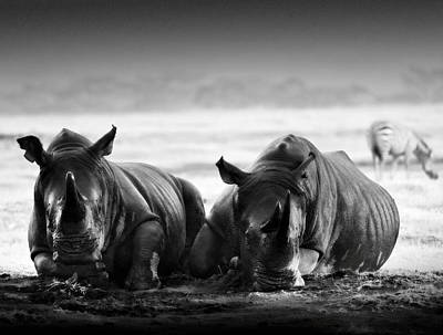 Rhinocerus Photograph - Resting In The Rain by Mike Gaudaur
