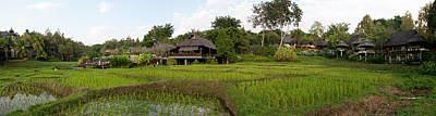 Rice Fields In Front Of Villas, Four Art Print by Panoramic Images