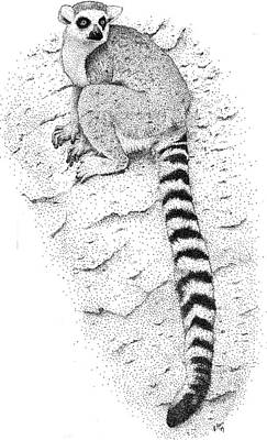 Photograph - Ring Tailed Lemur by Roger Hall
