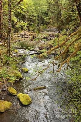 Green And Brown Photograph - River Through The Rainforest by Carol Groenen