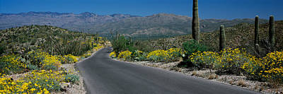 Saguaro Cactus Photograph - Road Passing Through A Landscape by Panoramic Images