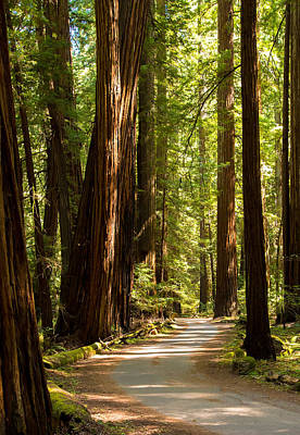 California Redwood Photograph - Road Through The Redwoods by Clay Townsend