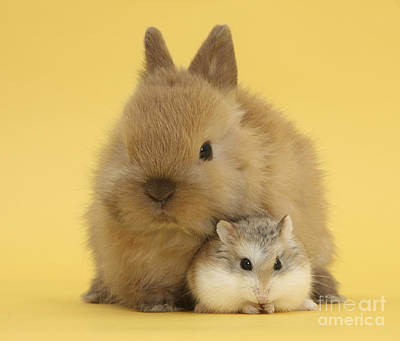 Hamster Baby Photograph - Roborovski Hamster And Rabbit by Mark Taylor