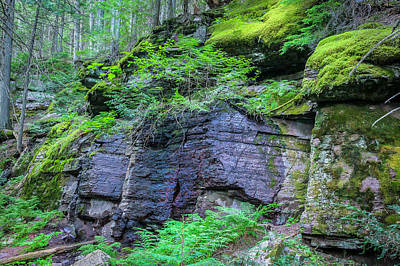 Photograph - Rock Wall Trail Of The Cedars Glacier National Park by Rich Franco