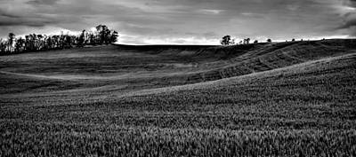 Photograph - Rolling Hills Of The Palouse by David Patterson