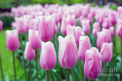 Closeup Photograph - Romantic Pink Flowers In Spring by Michal Bednarek