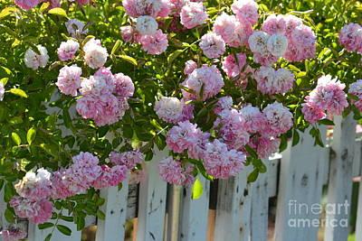 Pop Art - Romantic Roses by P S