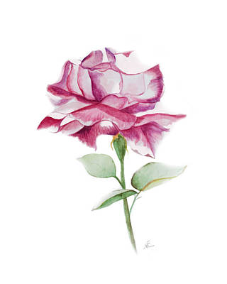 Rose 2 Art Print by Nancy Edwards