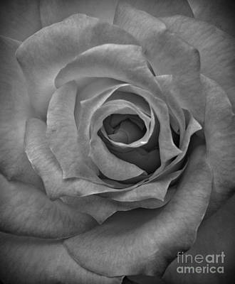 Photograph - Rose Macro Bw by Chalet Roome-Rigdon