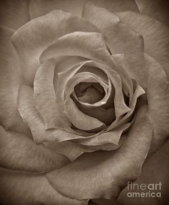 Photograph - Rose Macro Sepia by Chalet Roome-Rigdon