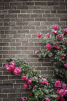 Gardening Photograph - Roses On Brick Wall by Elena Elisseeva