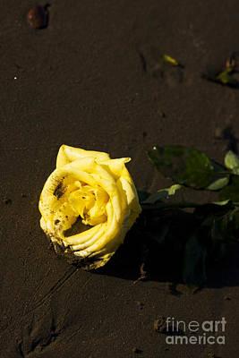 Golden Rose Photograph - Rosey Beach Wedding by Jorgo Photography - Wall Art Gallery