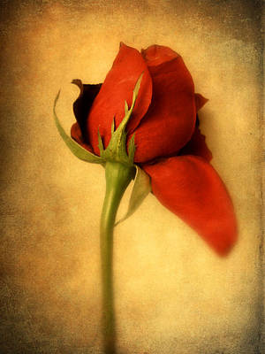 Photograph - Rouge  by Jessica Jenney