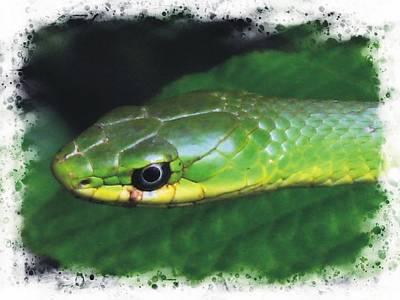 Photograph - Rough Green Snake by Joe Duket
